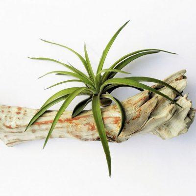 Groene plant als luchtverfrisser + meer tips