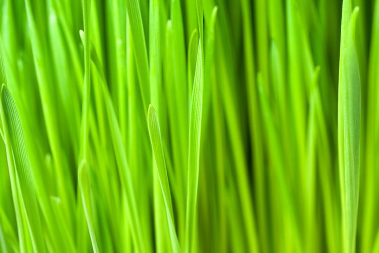 Groen als tarwegras