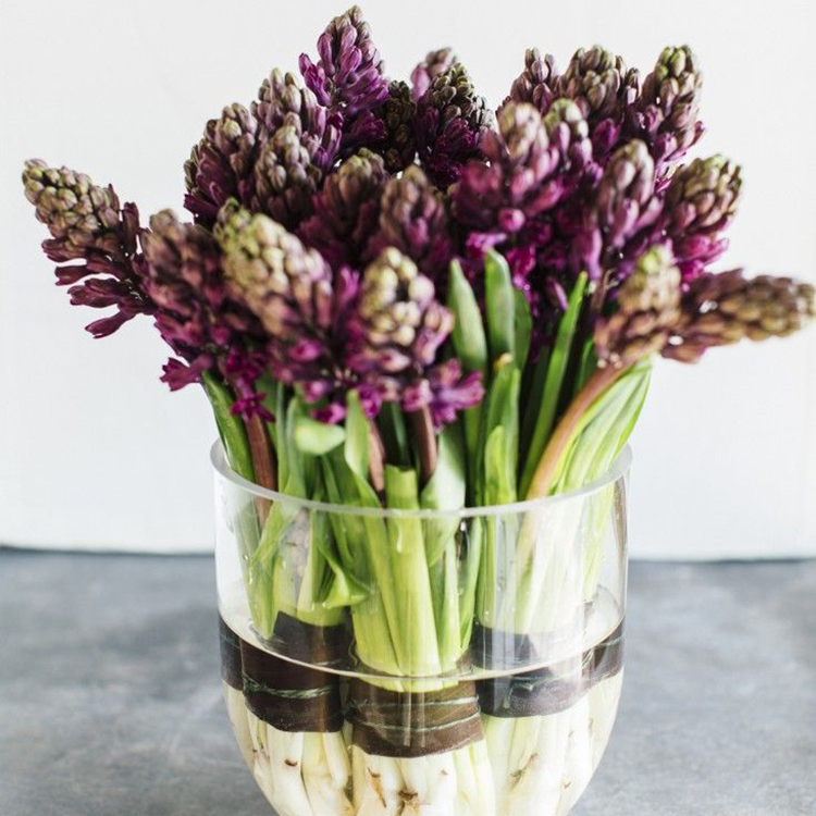 hyacinten-live-green-magazine