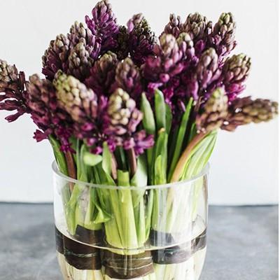 Hyacinten: zo staan ze mooi in huis!