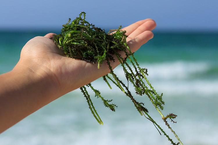 De verzorgende werking van zeewier