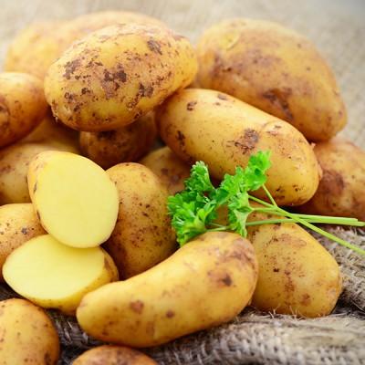Laag glycemische aardappel Carisma zorgt voor minder vetopslag