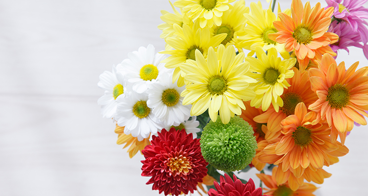 bloemen-langer-mooi-live-green-magazine-AdobeStock-mykeyruna