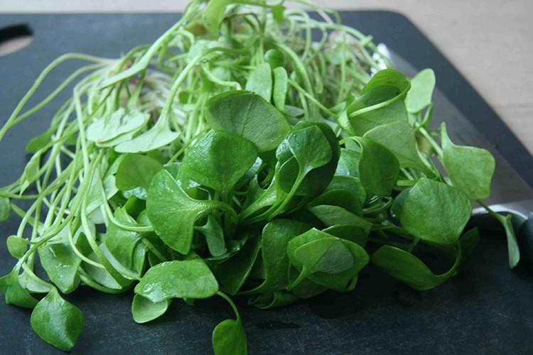 Energiezuinig recept: salade van winterpostelein met rucola