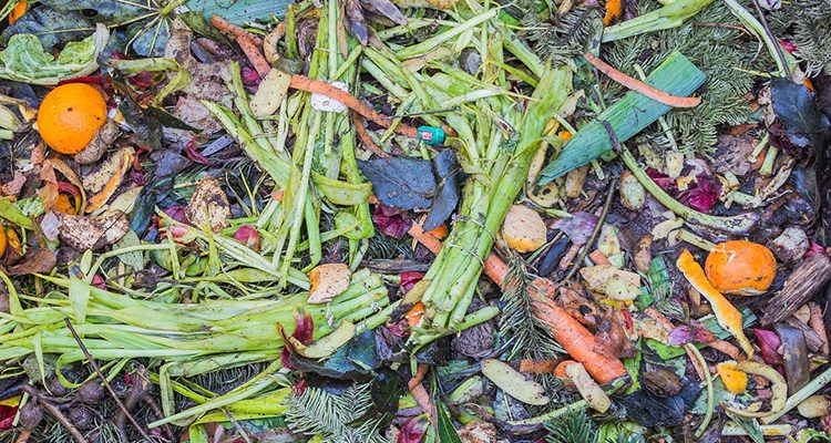 live-green-magazine-voedselverspilling