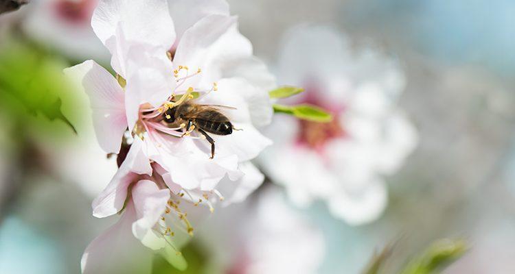 bee honest cosmetics-1