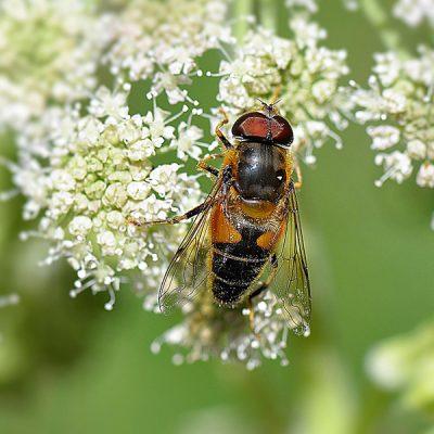 Blog Jaap: World Bee Day + wedstrijd