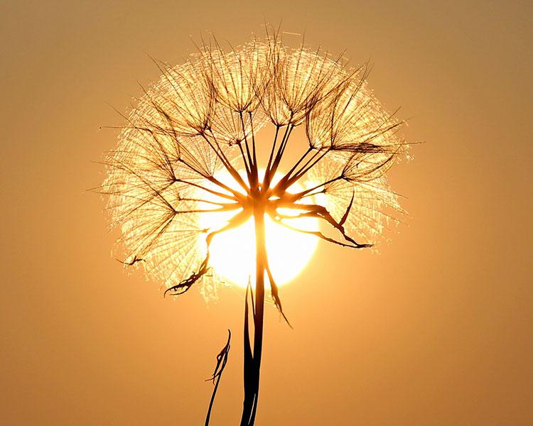 zonnebrandcreme