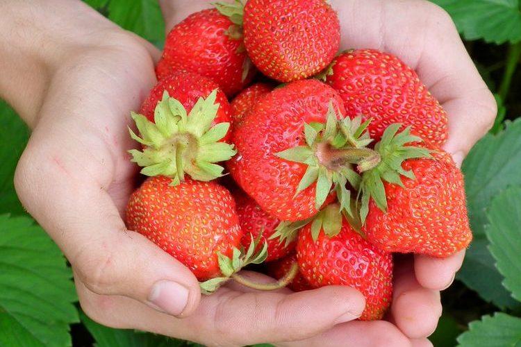 Tijd voor aardbeien! Zo smaken ze zoeter