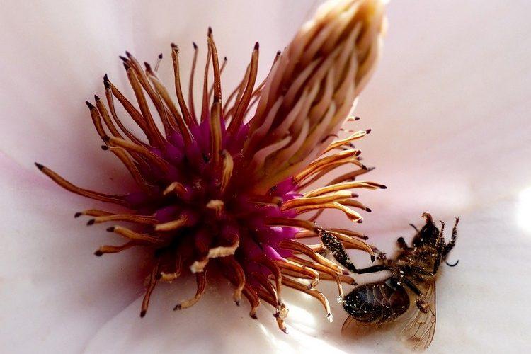 Feit: bijen in gevaar door neonicotinoïden! Ik sta #achterbio