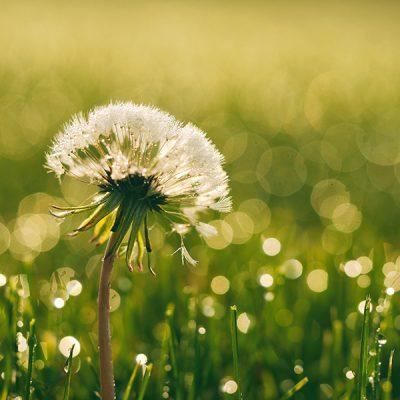 Aiii…het is weer hooikoortstijd. Check deze 7 tips