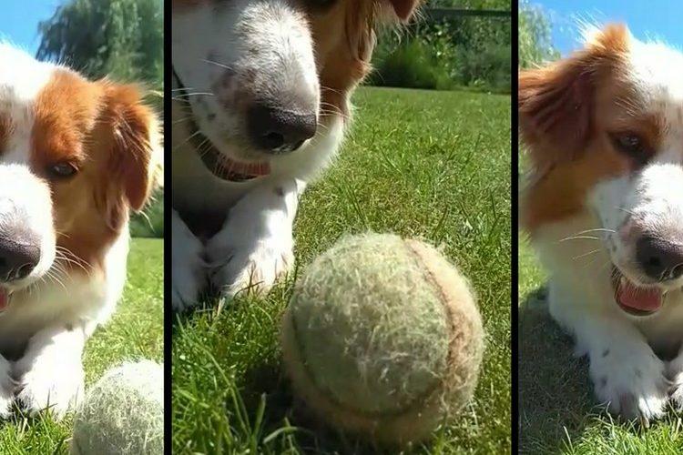 Bewegen met je hond in de natuur: gezond voor lichaam & geest