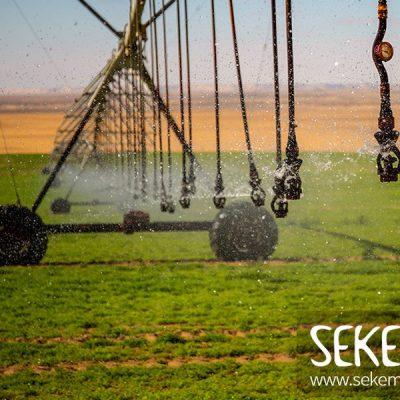Sigrid: be part of SEKEM en kies voor vrede in de wereld