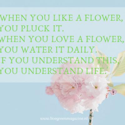 Quote en vraag week 34 over het leven begrijpen