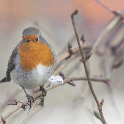 Tel jij dit weekend de vogels in je tuin?