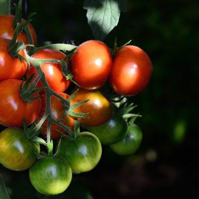 Tomaat voor een gezond 2020