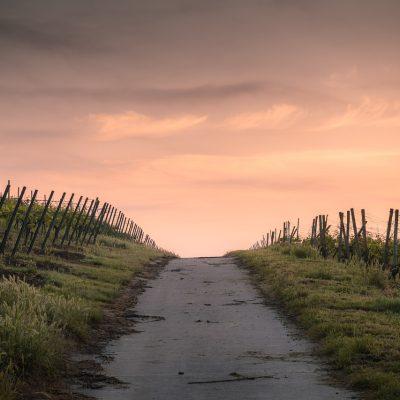 Blog Sigrid: waardering voor biodynamische landbouw