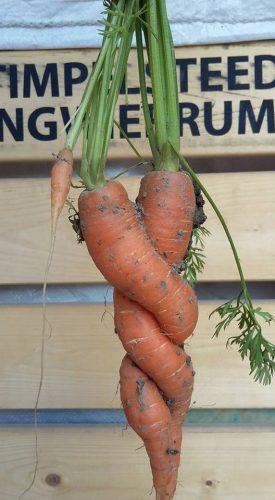 Om elkaar heen gekrulde wortelen