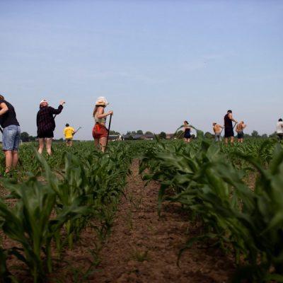 Geen festival, maar werken bij de bio boer