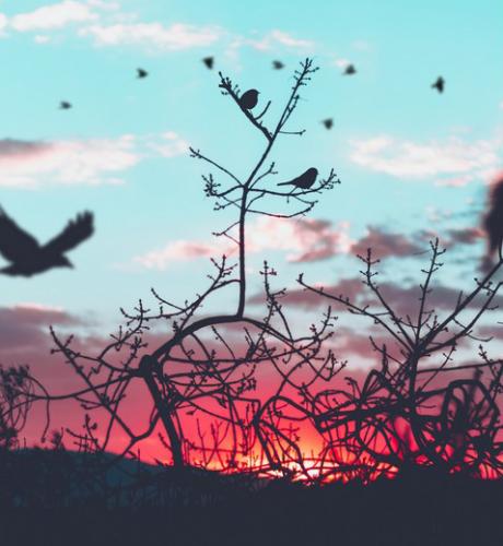nationale-vogelweek