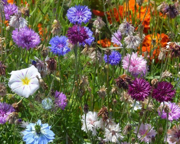 Biodiversiteitsherstel-bloemen