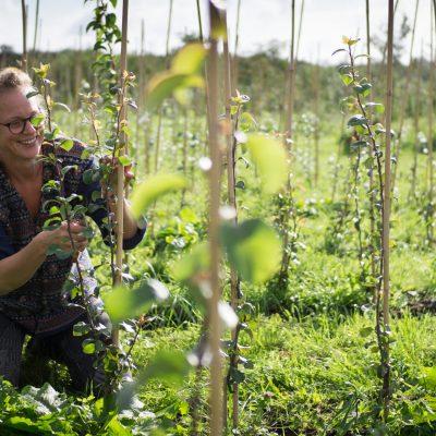 Een nieuw jaar, een nieuwe bio boom in je tuin