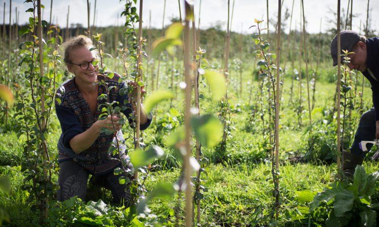 Bio boom in tuin