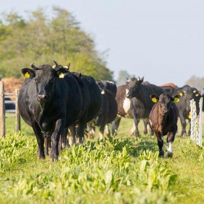 Zó anders is vlees van biodynamische zorgboerderij Zonnehoeve
